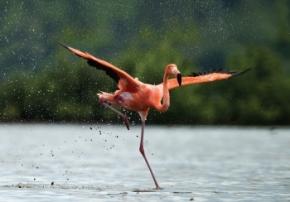 flamingo picture sml