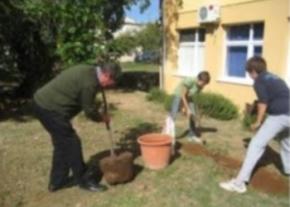 Preparing for planting image