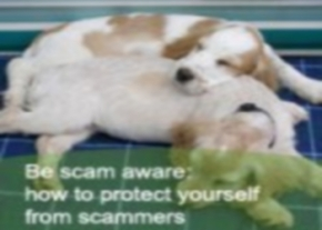 Animal scams image