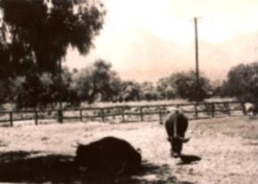 Newmans Farm image
