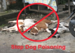 Stop dog Poisoning image