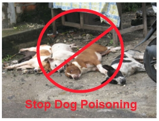 Stop dog Poisoning