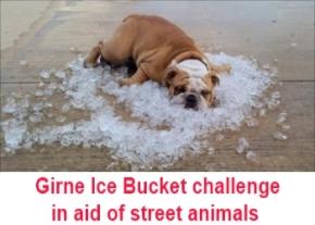 Girne Ice Bucket challenge