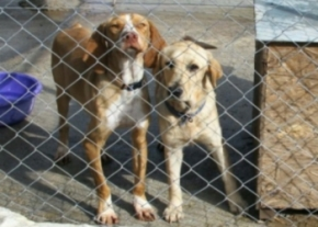 The dogs at KAR Rescue Centre need your Help image