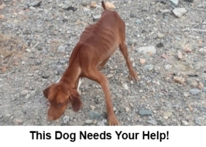 This dog needs your help