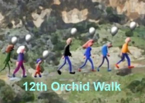 12th Orchid walk image