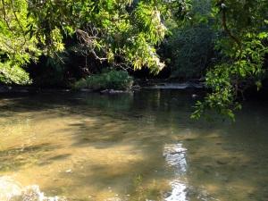 Anton River full of little fish