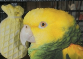 Charlie the Parrot
