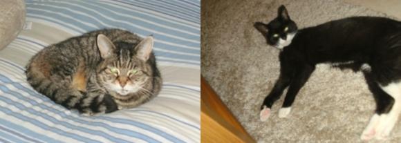 Cleo and Domino