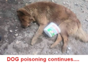 North Cyprus - Lannate - Poisoning of animals