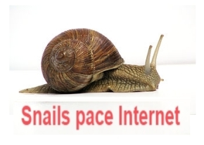 Snails pace internet