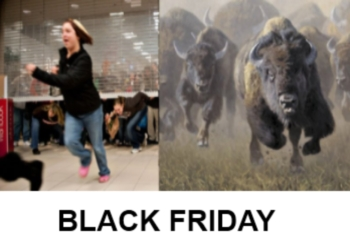 Black Friday Is Like A Buffalo Stampede By Ismail Veli