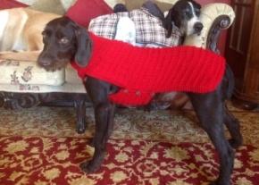 Birlik the strret dog image