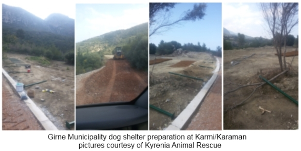 Karmi Karaman dog shelter