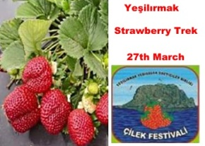 Strawberry Trek image