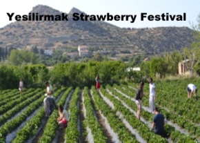 Strawberry Festival image