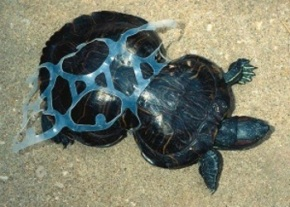 turtle in can plastic IMAGE