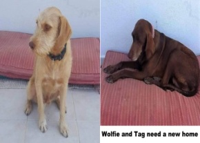 Wolfie and Tag image
