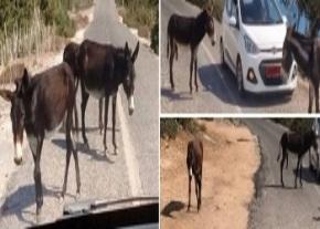 5-karpaz-wild-donkeys-image