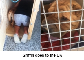 griffin-goes-to-the-uk-image