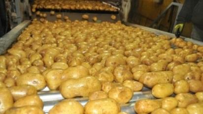 potato-exports-recommence