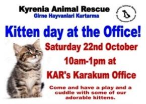 kitten-day-image