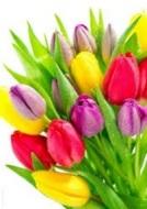 tulips-bunch