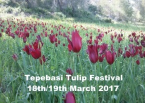 field-of-tulips-image