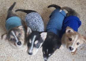 puppies-with-their-coats-image