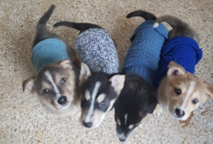 puppies-with-their-coats